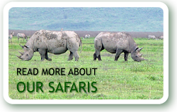 Read more about our safaris